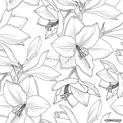 500x500 Amaryllis Hippeastrum Lilly Floral Seamless Pattern. Spring Summer