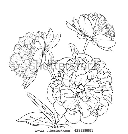 450x470 Peonies Isolated On White Background. Spring Summer Flowers Vector