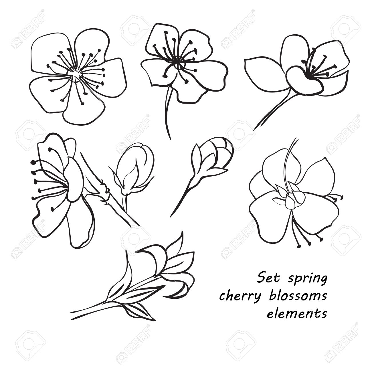 1300x1300 Set Of Spring Cherry Blossom Flowers. Hand Drawing. Black