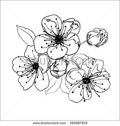 236x246 Set Of Spring Cherry Blossom Flowers. Hand Drawing. Cherry