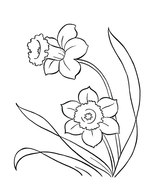 670x804 This Is Coloring Pages Spring Pictures Drawing Of Spring Flowers