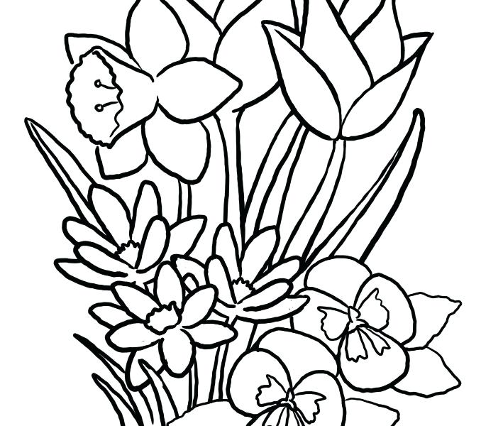 678x600 Spring Flower Coloring Pages Spring Flower Coloring Pages Free