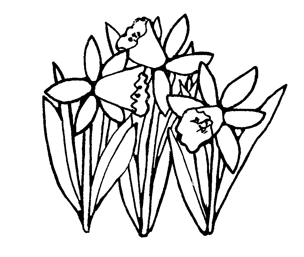 Spring Flower Drawing At Getdrawings Free For Personal Use