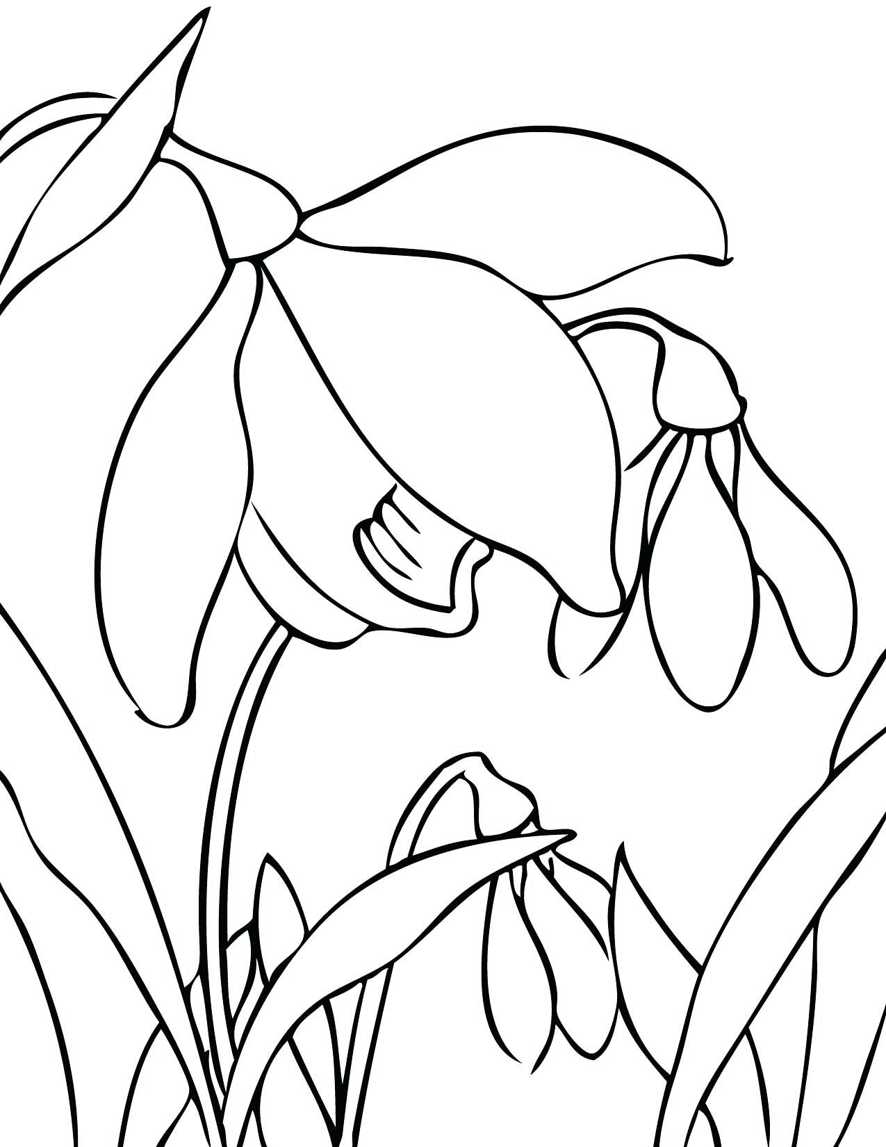 1275x1650 Coloring Coloring Pages For Spring Flowers Trends Flower Drawing
