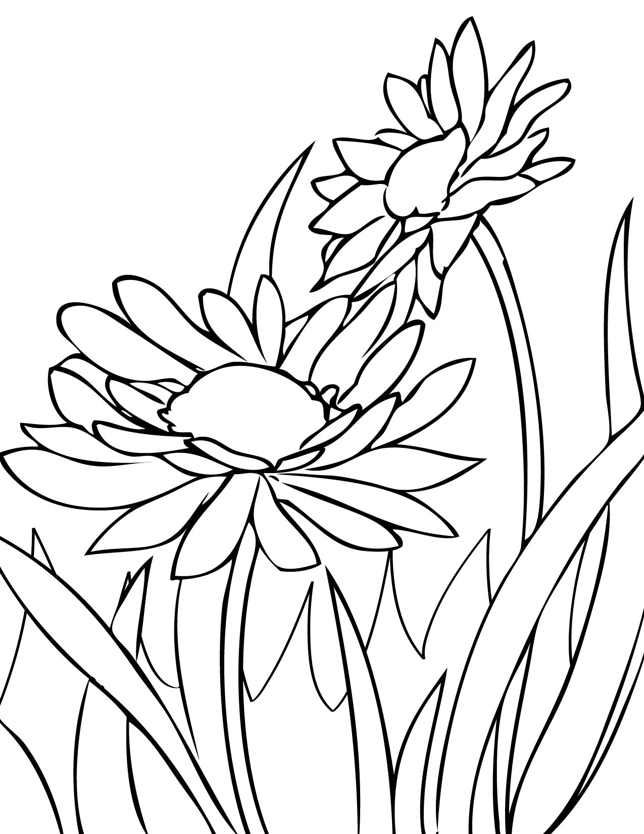 1275x1650 Draw Daisies Print This Page Spring Flowers Coloring Pages