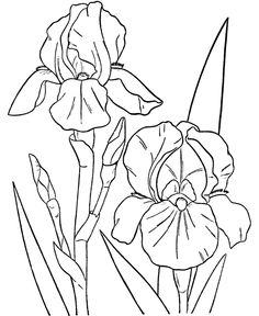 236x288 Flower Coloring Pages Spring Flowers Coloring Page. Color These