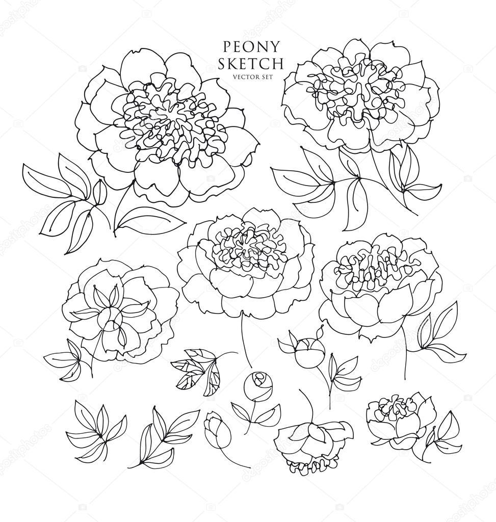 973x1024 Peony Floral Sketch. Spring Flower Vector Illustration. Black