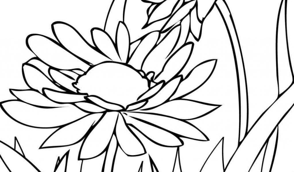 1024x600 The Images Collection Of Color Flowers Drawing Pages Free Download