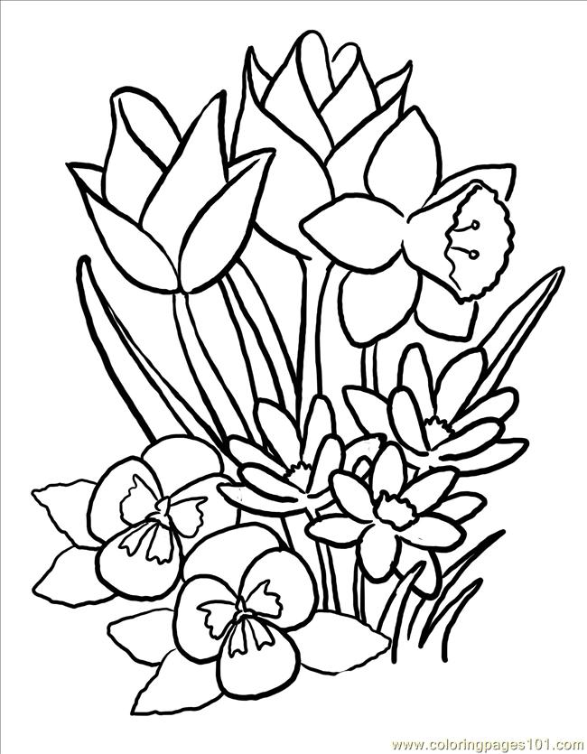 Spring flowers drawing at getdrawings free for personal use 650x835 unique spring flowers coloring pages 31 with additional print mightylinksfo
