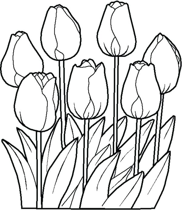 600x693 Drawings Flowers Tulips Coloring Pages Butterfly With Flowers