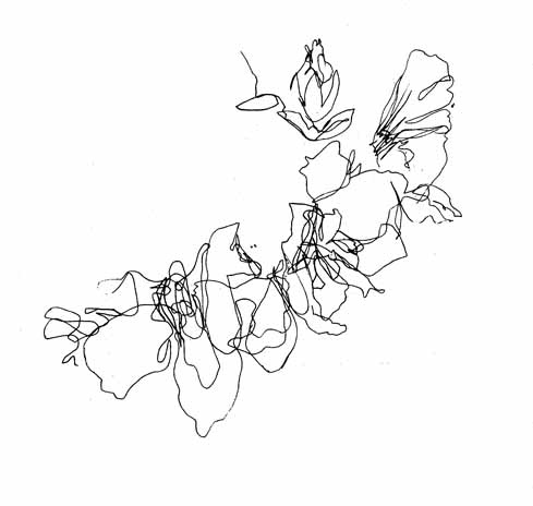 489x464 Drawn Line Art Flower
