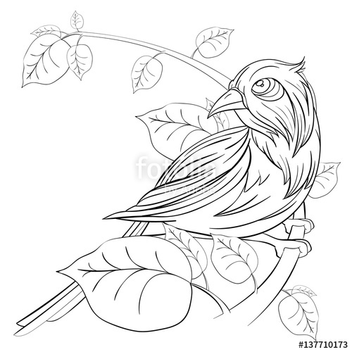 500x500 Exotic Bird Sitting On A Branch With Leaves On White Background