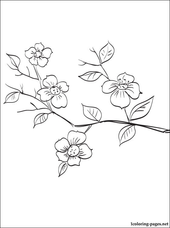 560x750 flowering fruit tree branch coloring page coloring pages