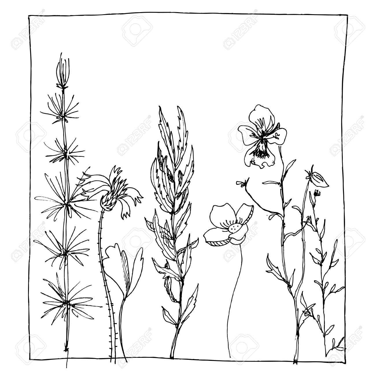 1300x1300 Floral Composition With Ink Drawing Herbs And Flowers In