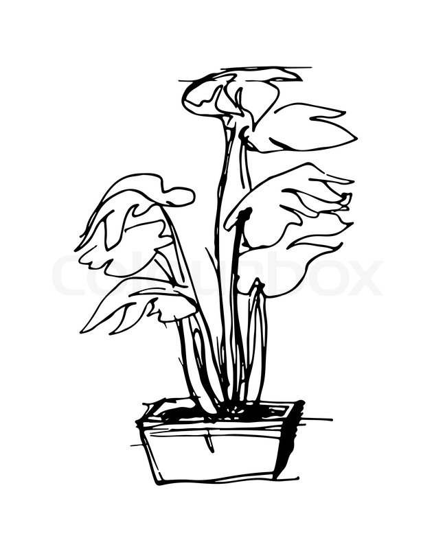 648x800 Black And White Vector Sketch Of The Room In Square Flower Pot