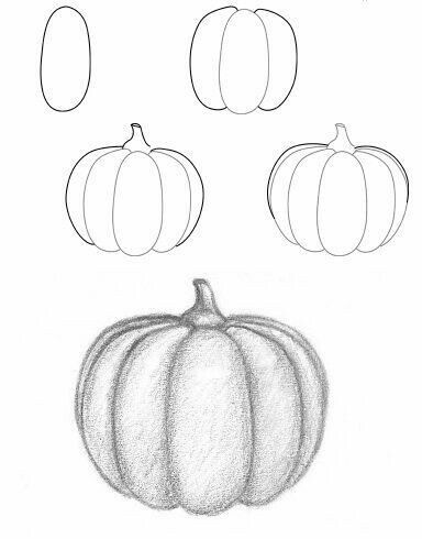 Squash Drawing