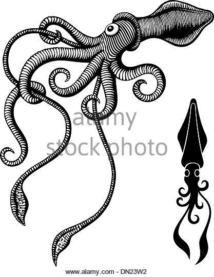 417x540 Squid Drawing Stock Photos Amp Squid Drawing Stock Images