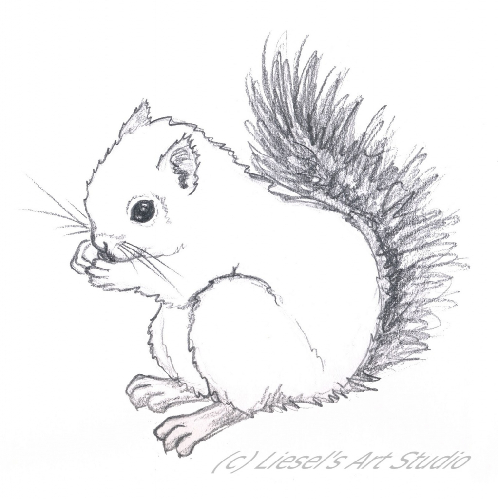 1022x1024 Drawing Of A Squirrel How To Draw A Squirrel Hqdraw Within