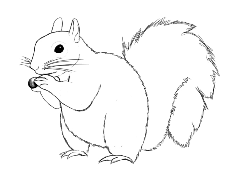 780x581 How To Draw A Squirrel Squirrel, Drawings And Embroidery