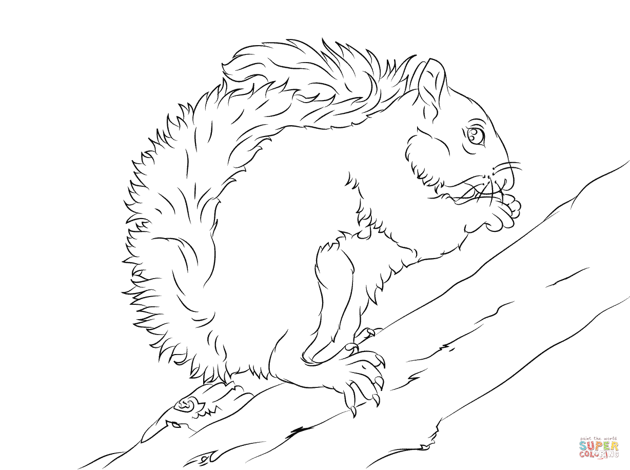 1228x916 Eastern Grey Squirrel On A Tree Coloring Page Free Printable