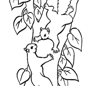 300x300 Squirrel Climbing Tree Coloring Page