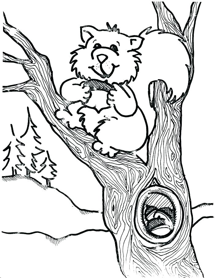 700x906 Squirrel Coloring Pages In A Tree Free Scaredy