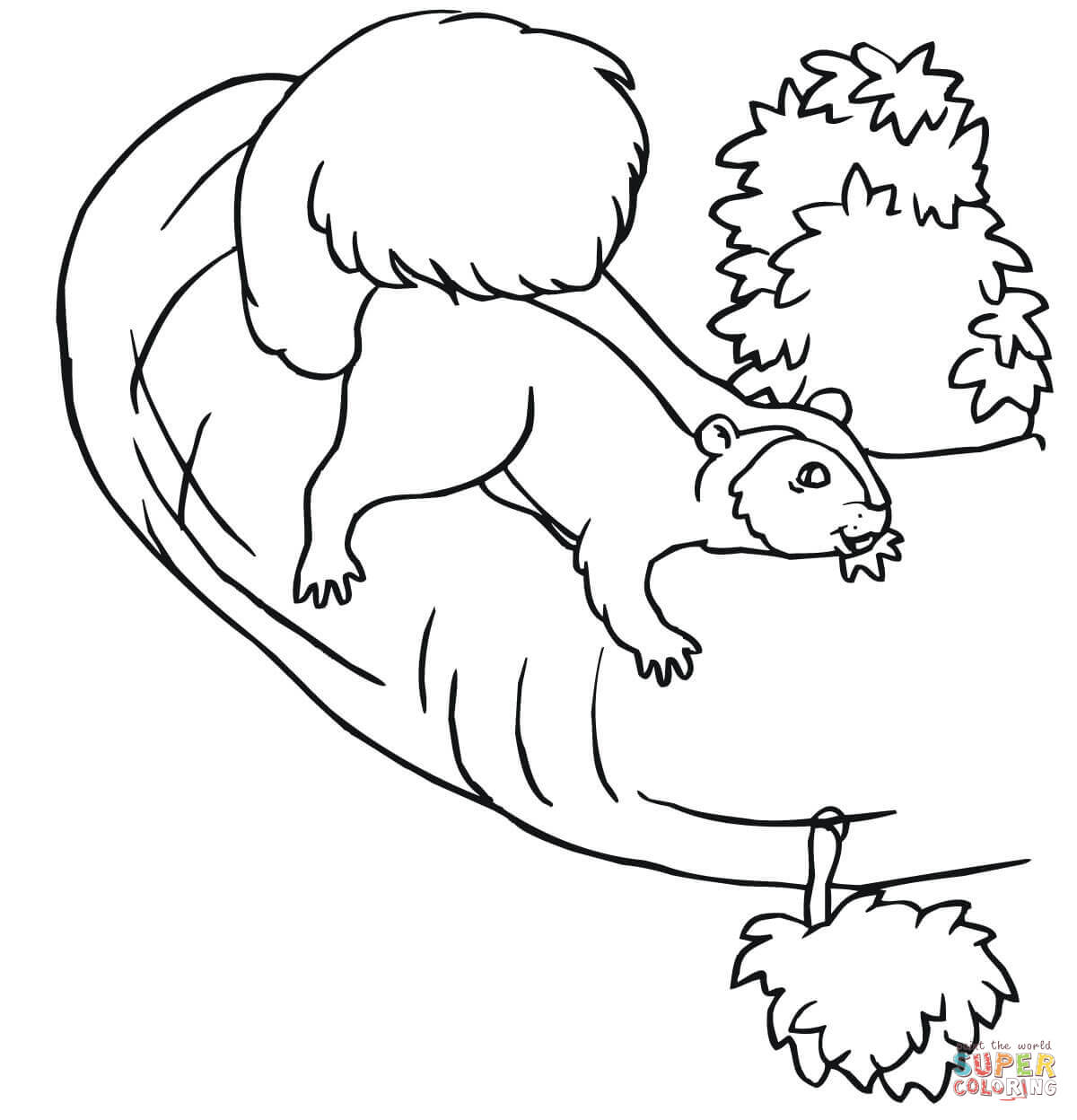 1200x1248 Squirrel On A Tree Coloring Page Free Printable Pages