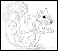 squirrel pencil drawing at getdrawings com free for personal use