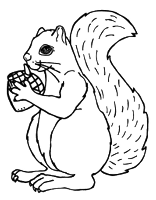 Squirrels Drawing at GetDrawings | Free download