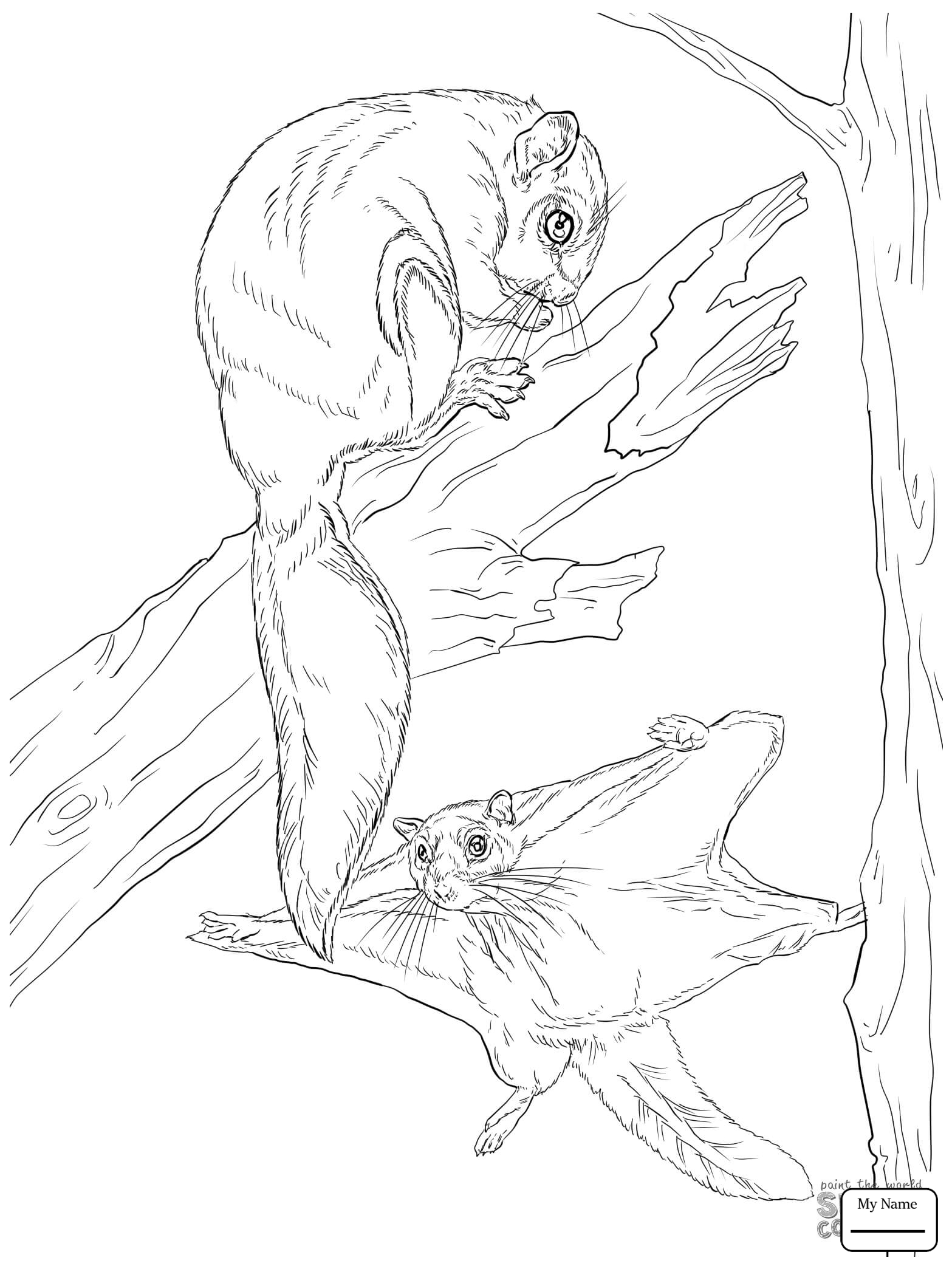 1567x2089 Coloring Pages Flying Squirrels Flying Squirrel Mammals