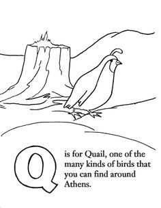 236x304 Draw A Quail