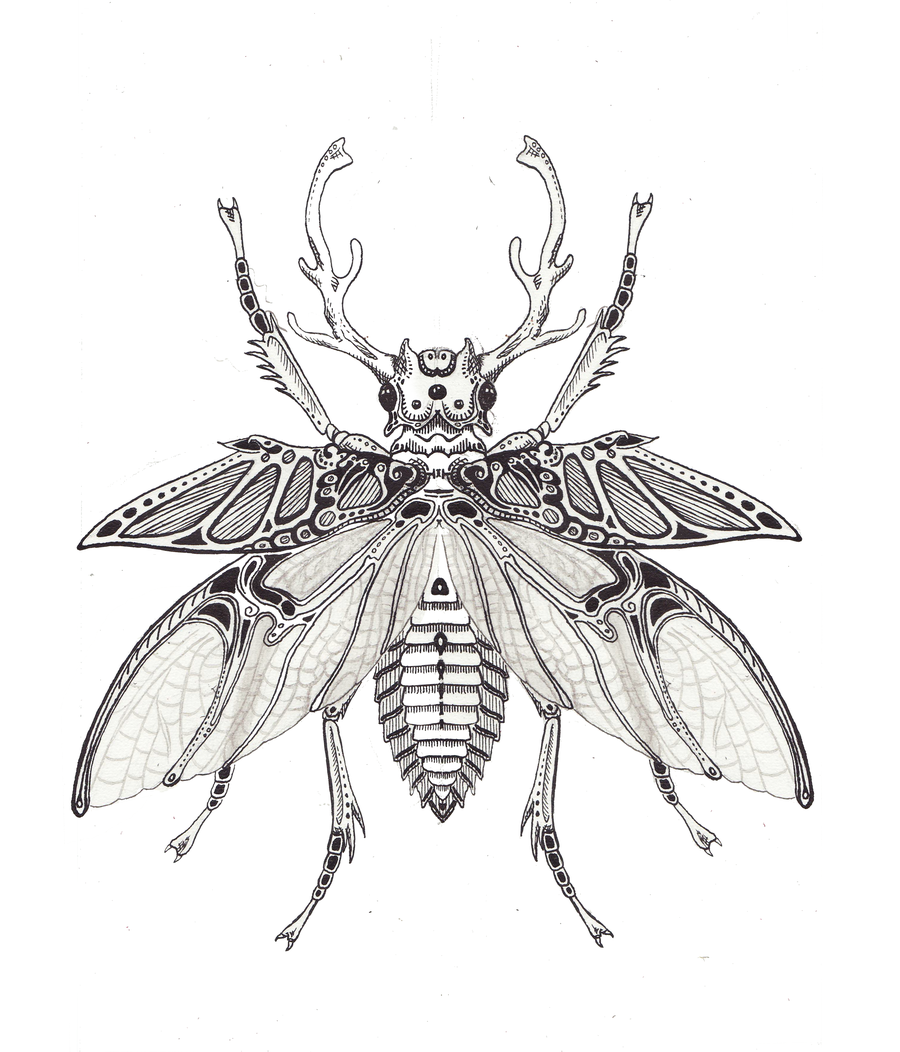 stag beetle drawing at getdrawings com free for personal use stag