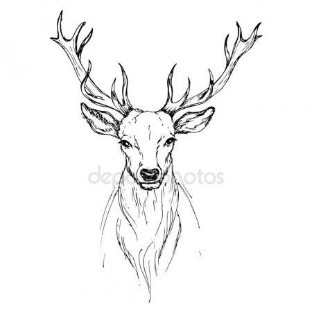 450x450 Vector Sketch By Pen Noble Deer Front View Stock Vector