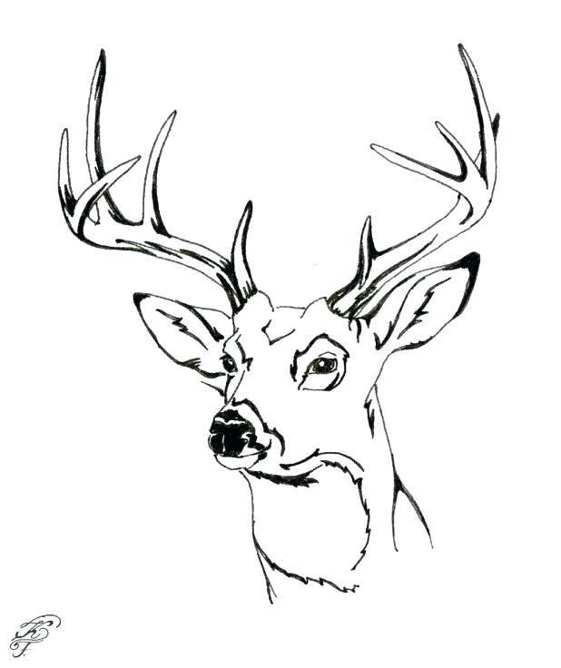 618x736 Deer Head Coloring Pages Plus Deer Coloring Picture Deer Coloring