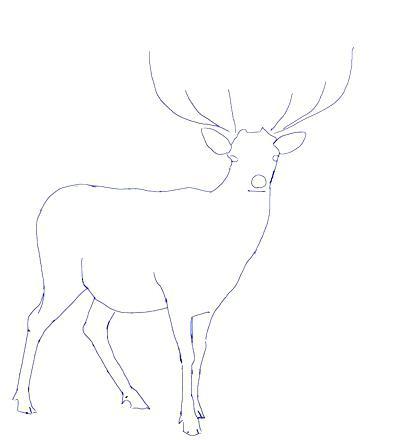 400x440 Deer Head Coloring Pages Reindeer Deer Head Outline Coloring Page
