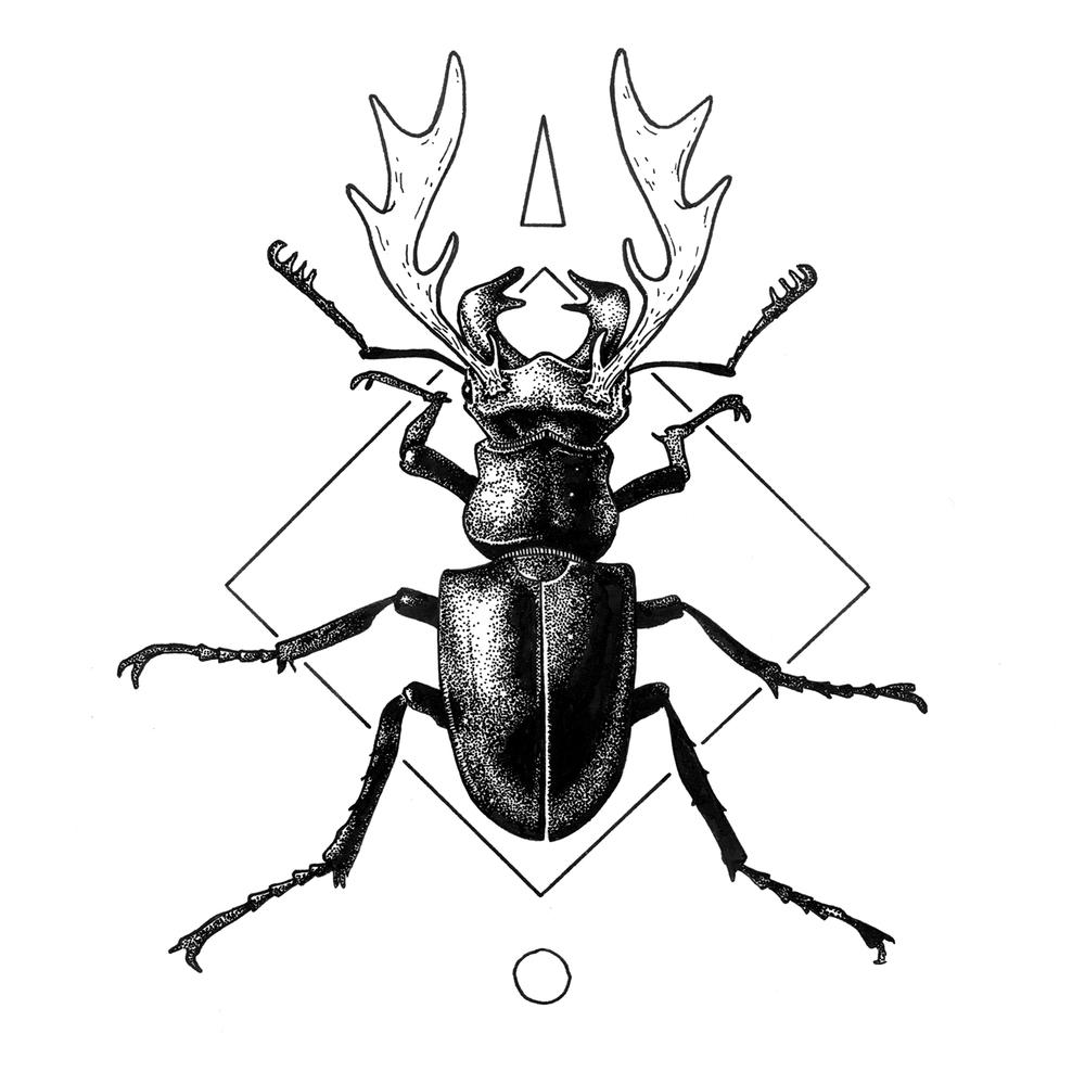 1000x1000 Bugs Amp Bones Hatch