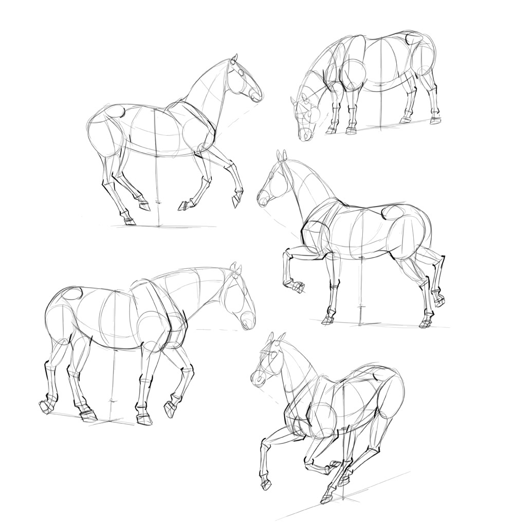 1000x1018 How To Draw Horses Step By Step Instructions