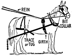 300x234 Horse Harness