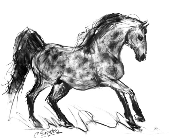 600x486 Dapple Grey Stallion Two, Charcoal Equine Horse Drawing By Carol