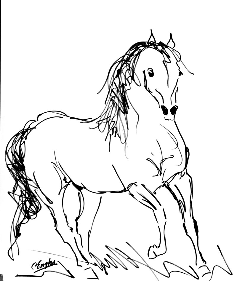 800x948 Carol Engles Art Cantering Stallion One, Equine Ink Drawing By