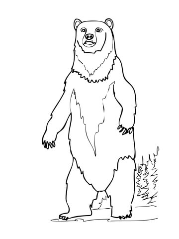 360x480 Brown Bear Standing Up Coloring Page Free Printable Coloring Pages