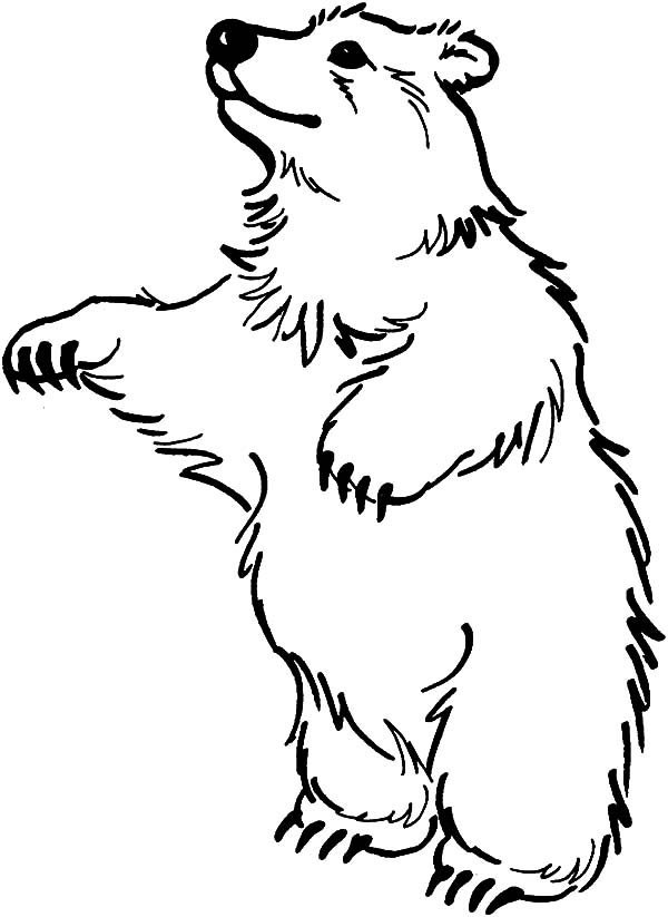 600x823 Circus Bear Standing On Two Feet Coloring Pages Best Place To Color