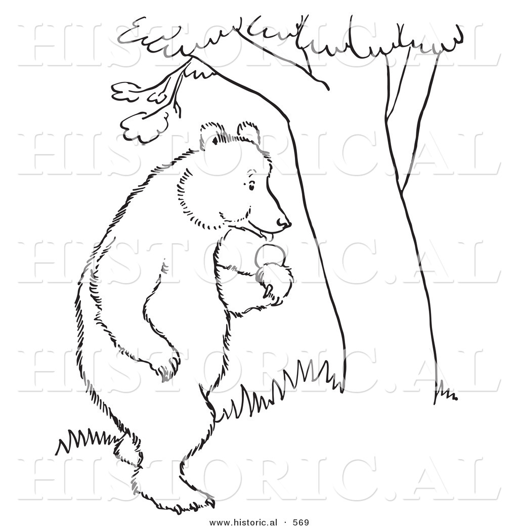 1024x1044 Historical Vector Illustration Of A Bear Standing With An Apple