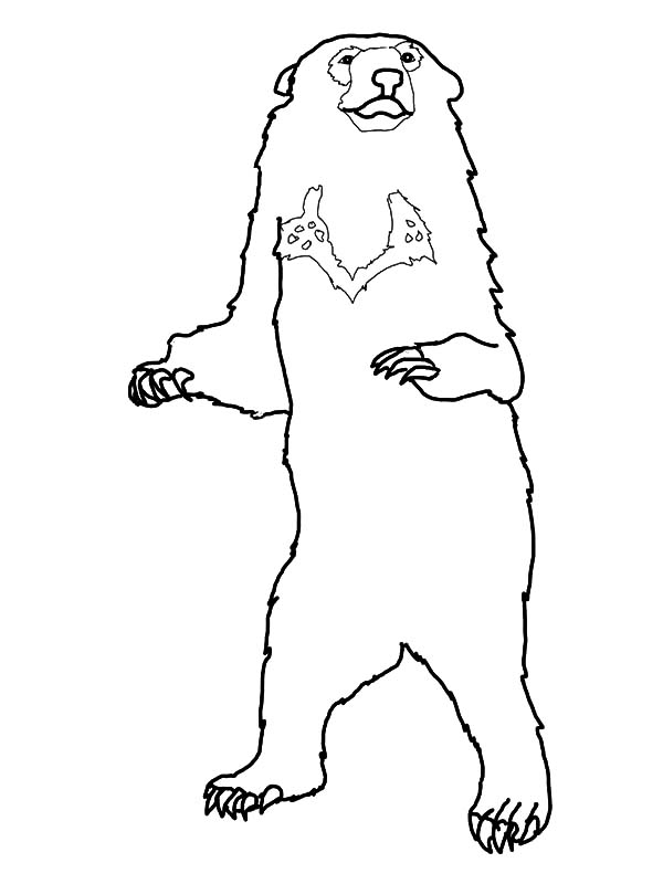 600x800 Honey Bear Standing Tall Coloring Pages Coloring Sky