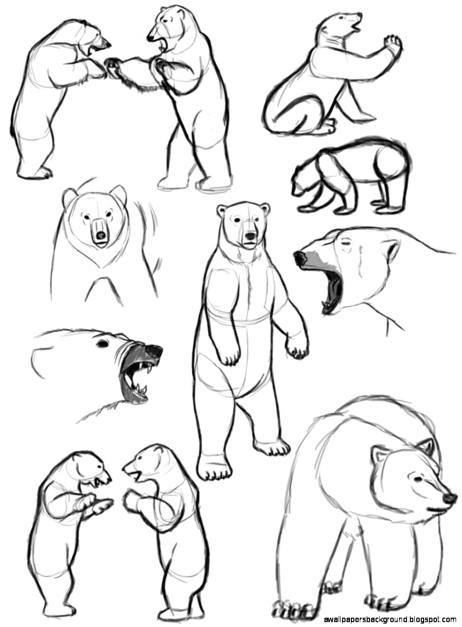 940x1277 Standing Bear Drawing Wallpapers Background