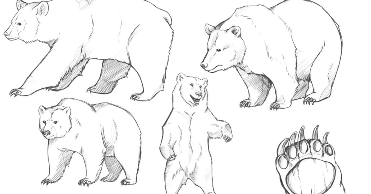 1200x630 Bear Drawing Wallpapers Background