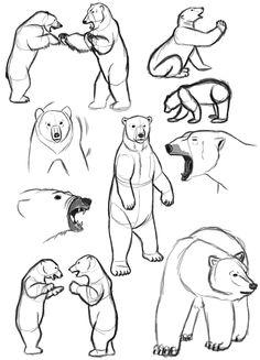 236x327 Bear Sketches