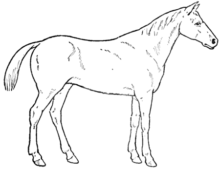 450x347 How To Draw Horses With Easy Step By Step Drawing Lessons
