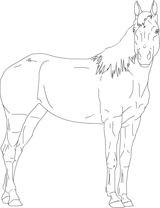 649x844 Best Photos Of Quarter Horse Outline Standing Horse Outline