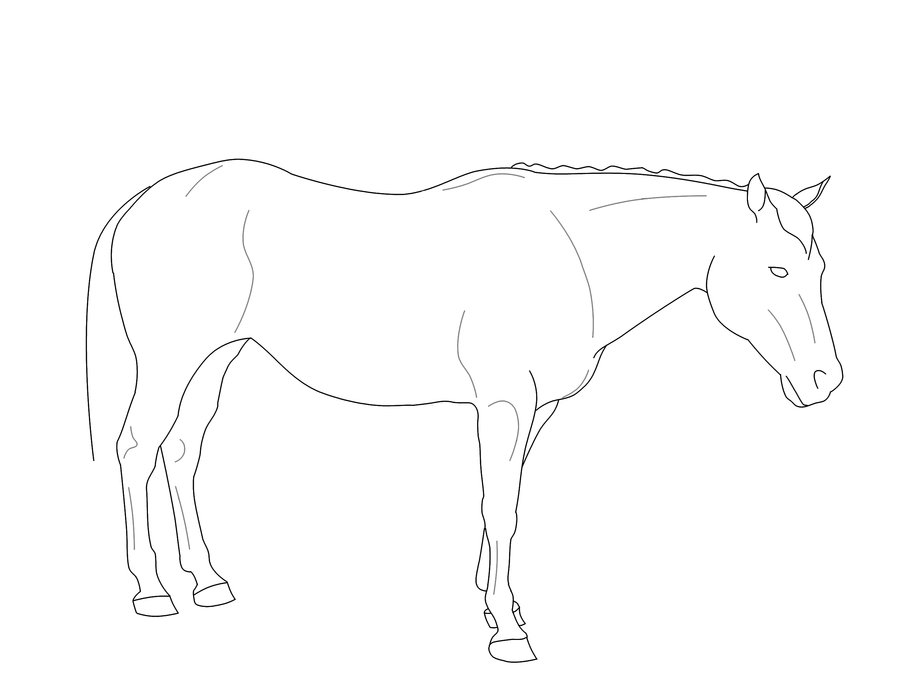 900x675 Standing Horse Line Art By Exotic011
